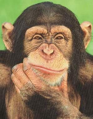 chimpanzee_thinking_poster